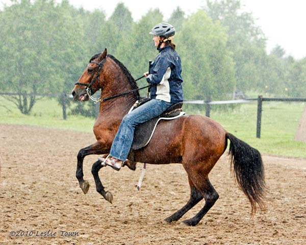Paso Fino Gelding Gypsy ridden by Angie, playing horse hockey