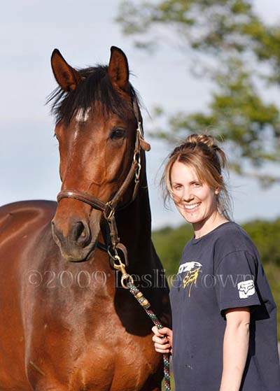 Warmblood Trakehner horse