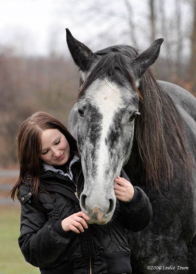 Thoroughbred/Percheron horse