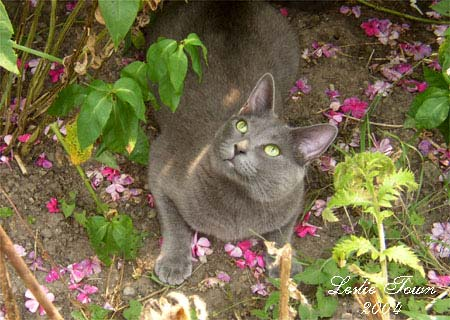 Grey cat with pink flowers